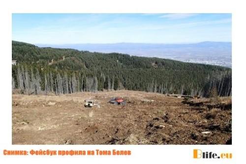 """Унищожени са над 20 дка гори в парк """"Витоша"""""""