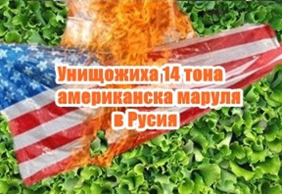 Унищожиха 14 тона американска маруля в Русия