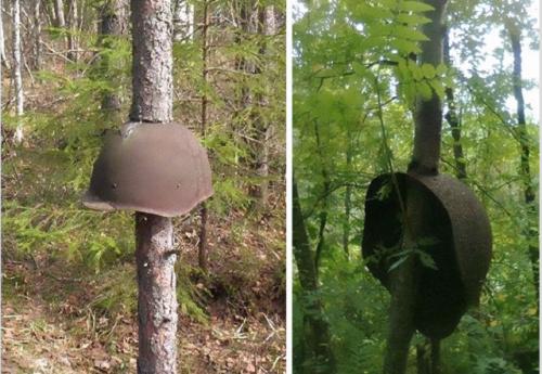 Тези каски, най-вероятно съветски, са паднали вероятно по време на престрелка, когато тези дървета са били само фиданки.