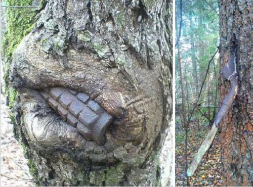 Граната (вероятно необезвредена) се показва от ствола на дърво. Сапьорска лопата се разпада във вътрешността на дървото в дясно.