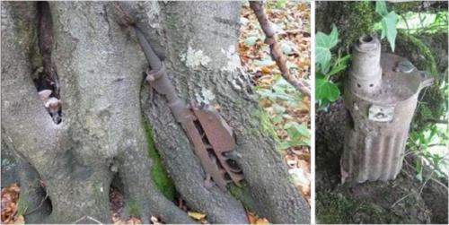 Останките от изгнила карабина Манлихер Каркано са станали част от ствола на дървото в ляво. Пушка Максим стърчи от земята в дясно.
