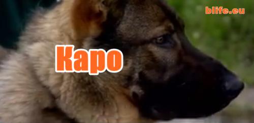 Кучето Каро
