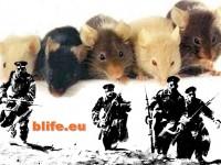 Добре дошли в страната на мишките