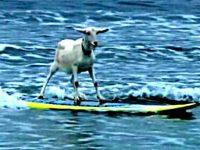 Новите сърфисти ще яхнат вълната на недоволство на есен!