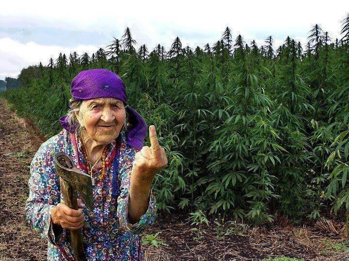 Баби с брадви ще бранят нивите на внуците си!